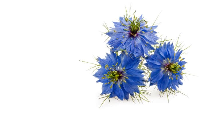 Nigella Sativa Seed Oil