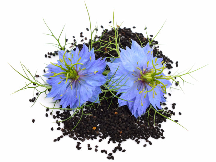 Phytochemicals in Black Seed Oil